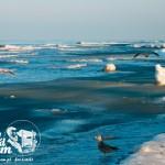 Zima nad morzem - brzeg morski