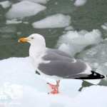 Zima nad morzem Bałtyckim