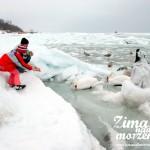 Zima nad morzem - Dokarmianie ptaków