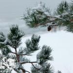 Zima w Pobierowie - Biała plaża