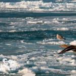 Zima nad morzem - zamarznięty Bałtyk
