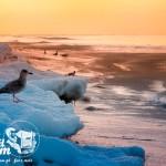 Zima nad morzem - Bałtyk