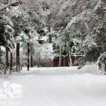 Zima nad morzem - Pobierowo