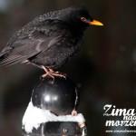 Zima nad morzem - Ptaki w lesie w Pobierowie
