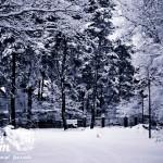 Zima nad morzem - Pustkowo