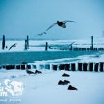 Zima nad morzem - plaża w Rewalu