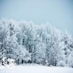 Zima nad morzem - Las na wydmie