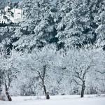 Zima nad morzem - Drzewa na wydmie